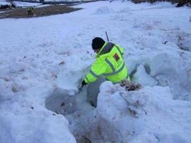 Civil Defence volunteer digging out sheep stuck under snow