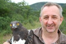 Chris Sharpe with a Black Chested Snake Eagle