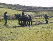 Competitors practice for the horse ploughing match.