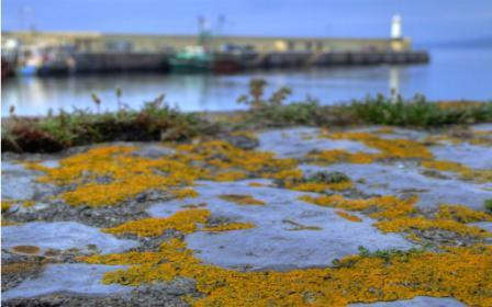 Lichens near Peel Breakwater