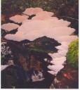 Fungi by Matthew Middleton