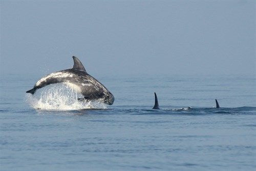Agreement on marine mammal conservation extended to Island