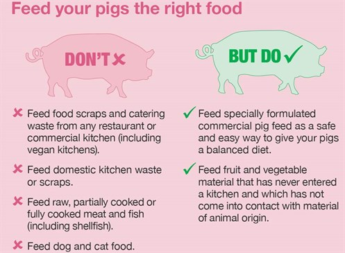 Feed your pigs the right food