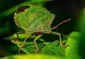 Sean Corlett's close up shot of bug