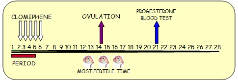 Clomid post ovulation side effects